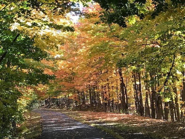 Enjoy the Autumn breeze Garden side.