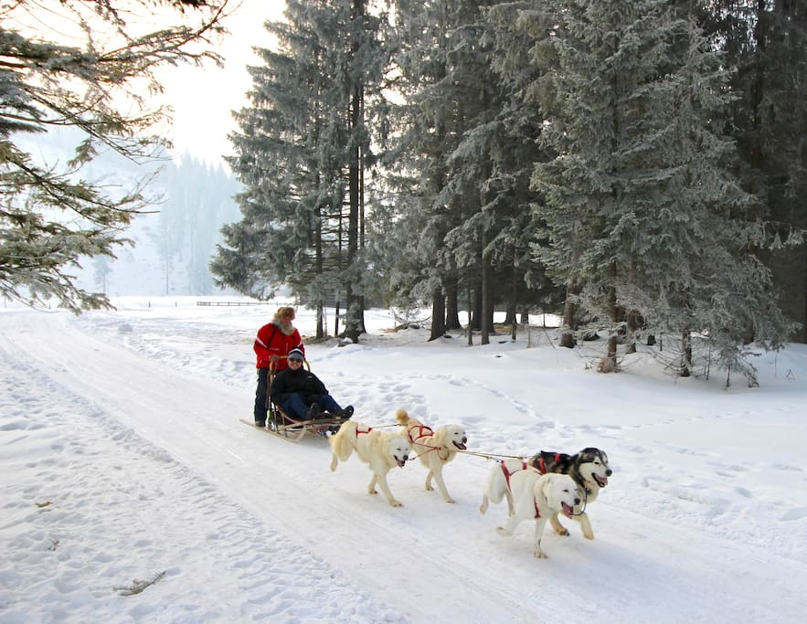We offer Husky ride trips with a stop at the local cheese hut. Ps. Book in advance!