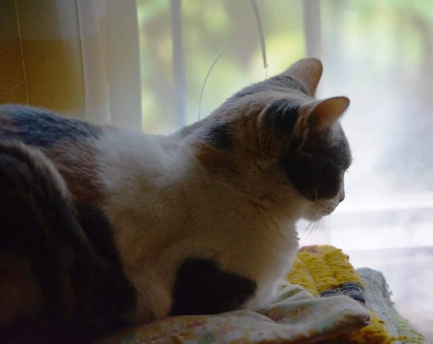 Nuestra gata: Pisquita