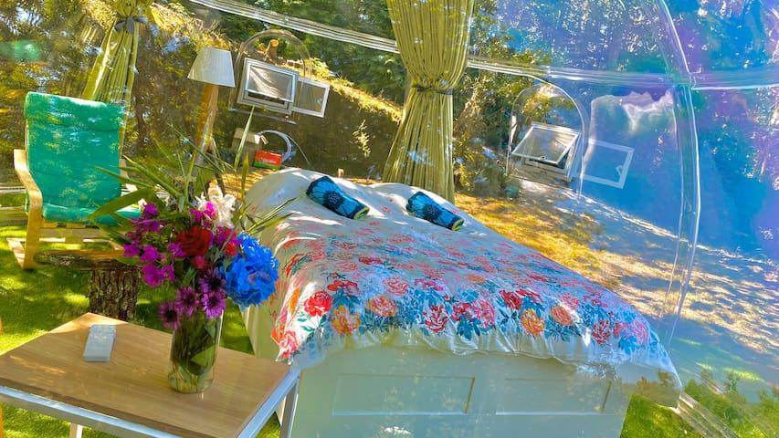 New Glass Dome 🍊 - NaturViana naturismo