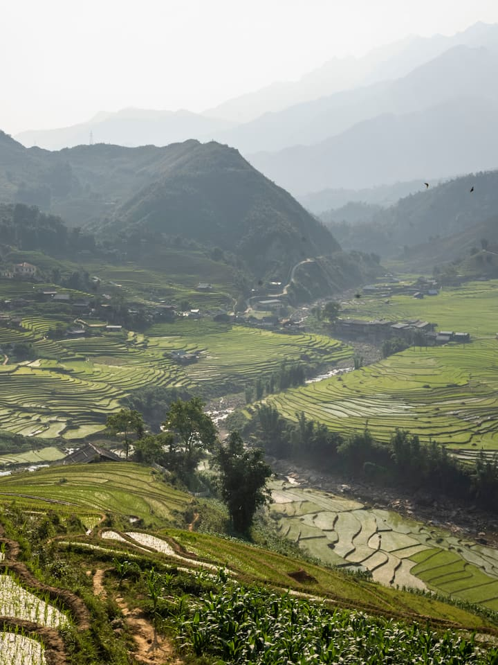 Enjoy the Sapa's majestic rice fields