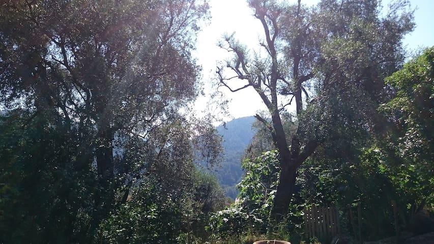 Châlet dans les bois à 600m d'alt. et 10km de Nice