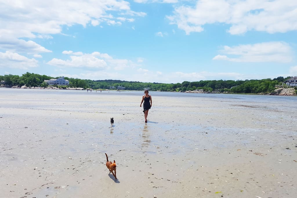 Playing with our tiny dogs on the mud flats (just walk out from the dock at low tide!)