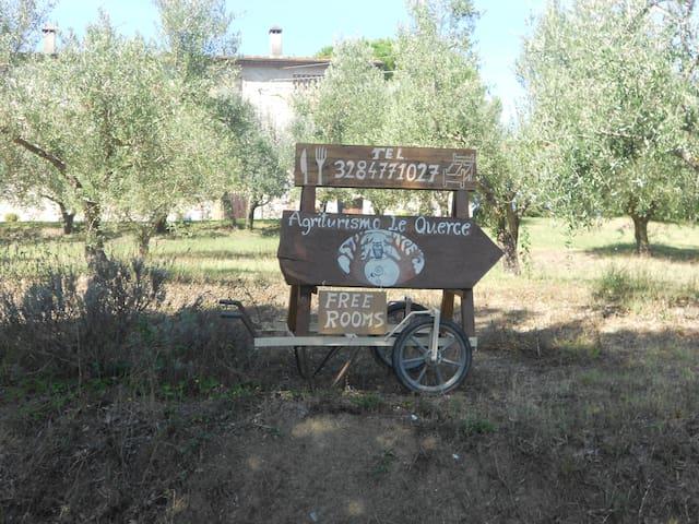 Agriturismo Le Querce - camera lavanda - Querceto - Oda + Kahvaltı