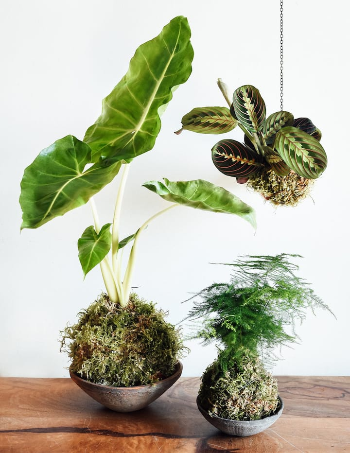 Make your own Urban Oasis!