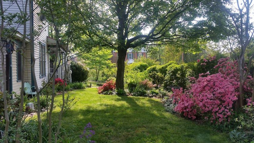 Side Cottage garden 4.19.16