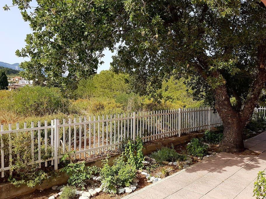 Botanic garden at the back yard