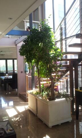Private Room & Bath for Professionals - Kogarah - Casa