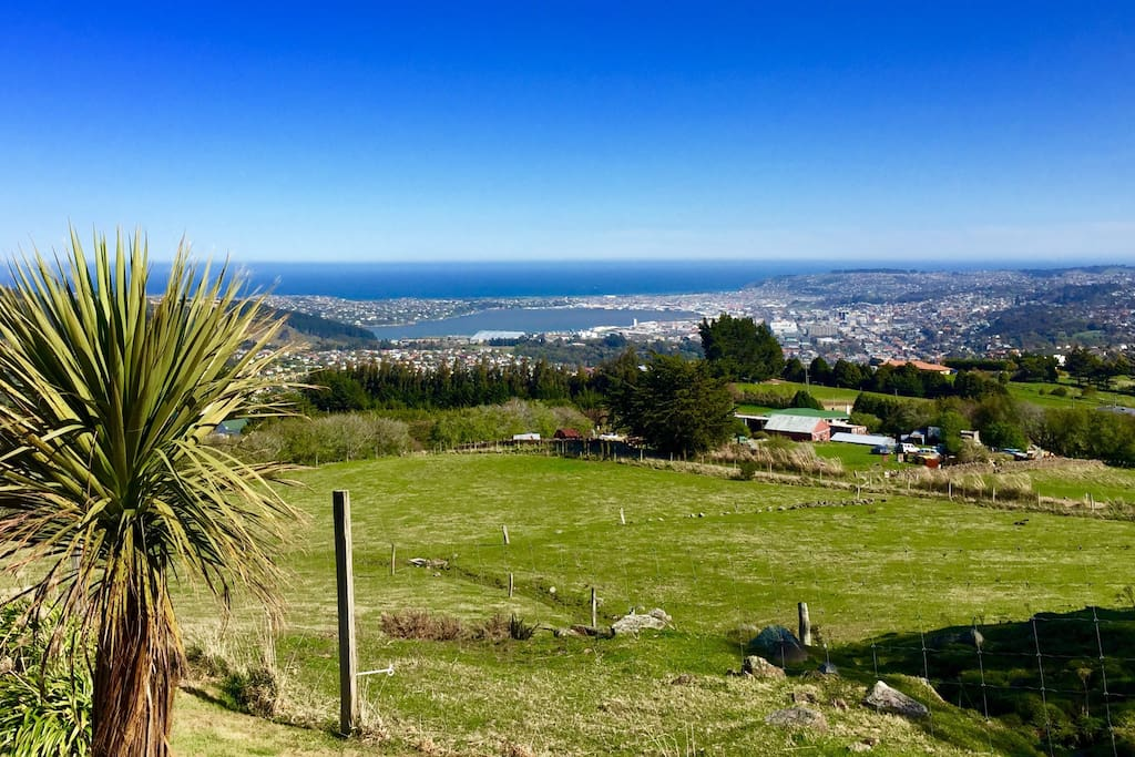 Top of the Dunedin city!