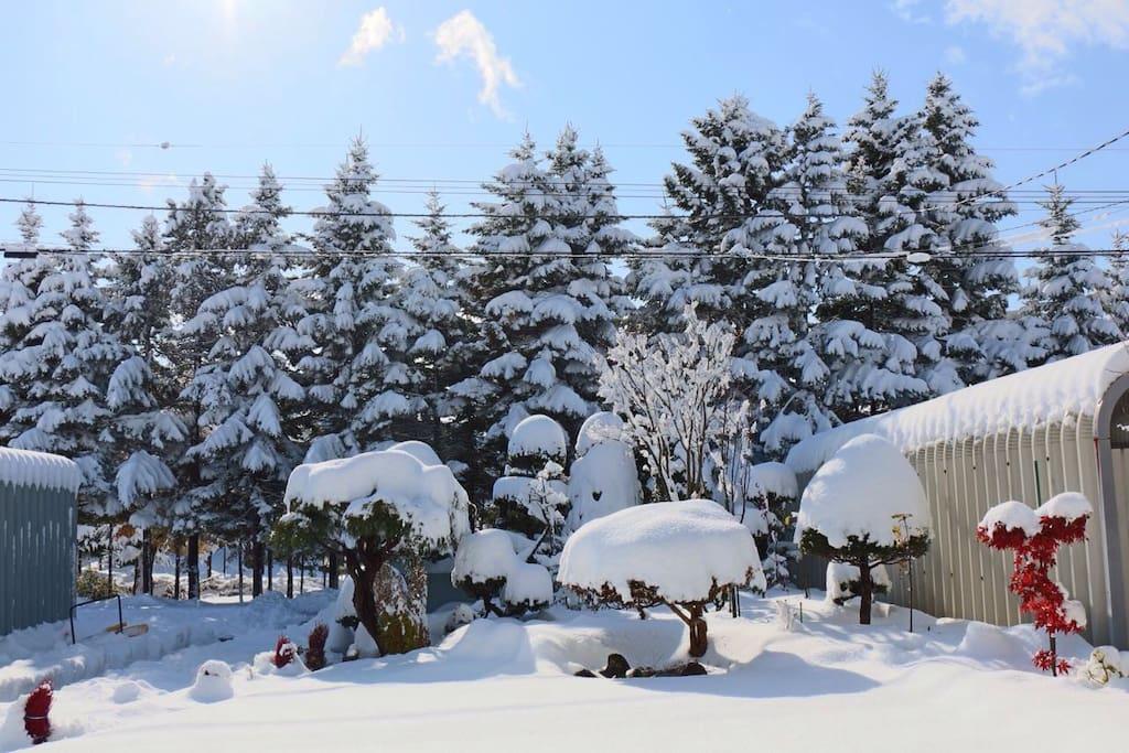 冬天的院子