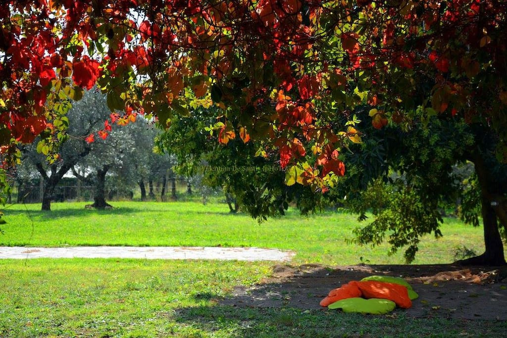 THE GREAT GARDEN - IL PARCO