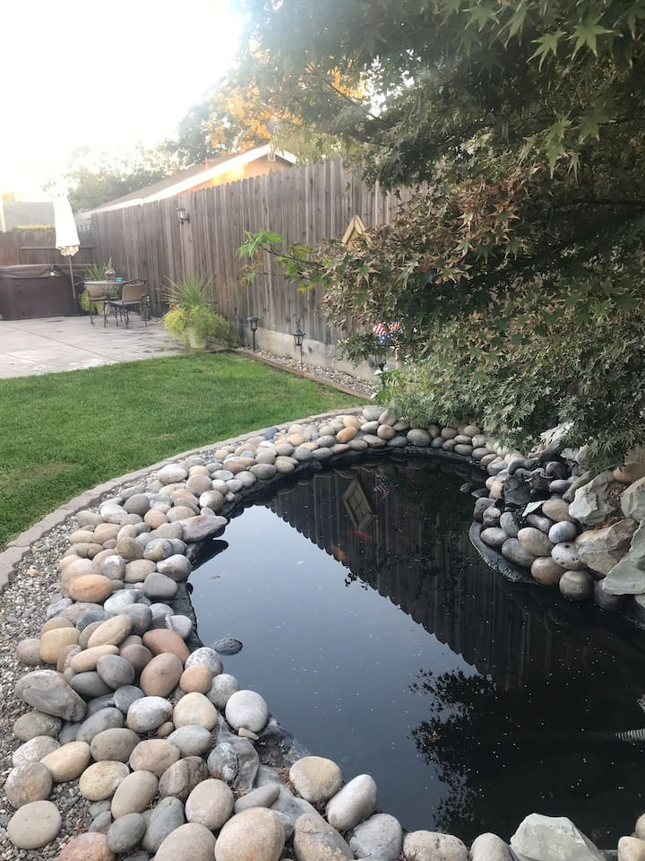 Backyard's pond with variety of goldfish