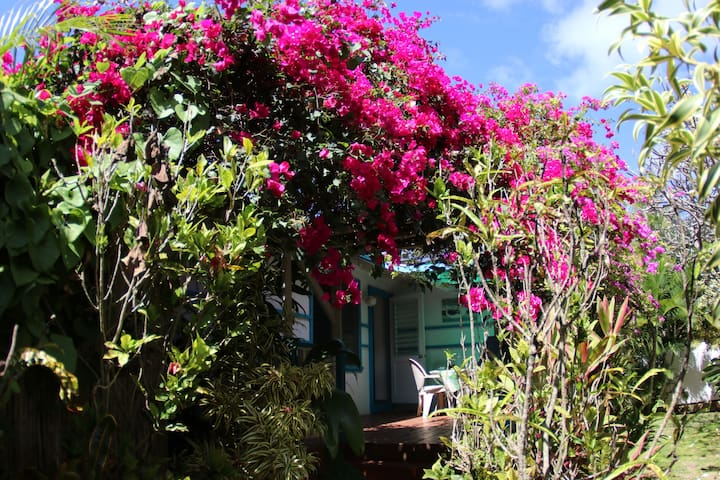 Cottage by the Sea, lush, tropical garden