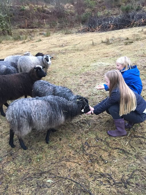 We have sheep on the farm, which you're welcome to visit