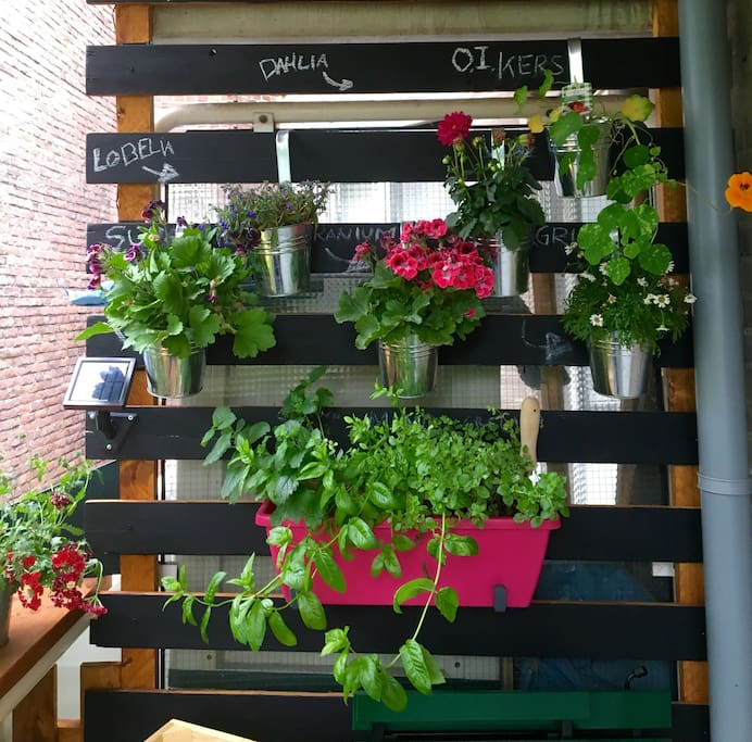 Cute balcony with fresh herbs and sun in the afternoon