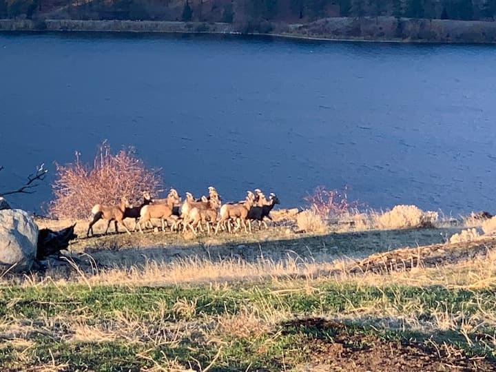 Wildlife and Wine Lakehouse Retreat