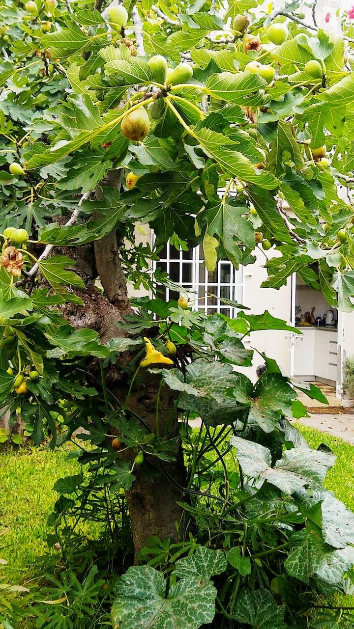 Casa con jardín en Vicente López ♡
