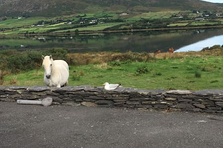 Private Room on the Ring of Kerry