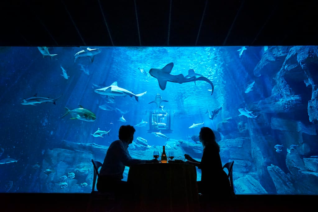 The Shark Aquarium Houses For Rent In ParisEArrondissement - 10 awesome aquariums where you can spend the night with sharks