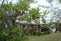 Family beach house in Mikiverna chalkidiki