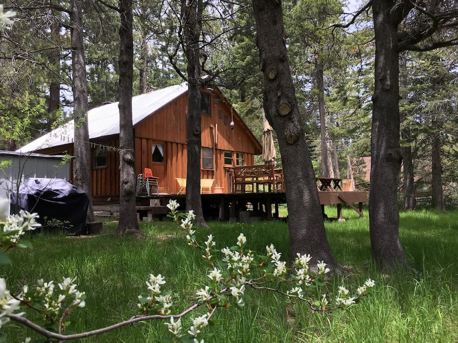 Cozy mid century cabin doggie yes houses for rent in for South lake tahoe cabins near casinos