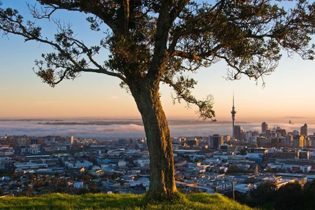 View from top of One Tree Hill (Cornwall Park)