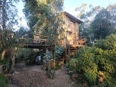 Alda Charrúa ( la casa del árbol)