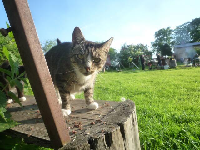 Freche Katzen fühlen sich hier wohl