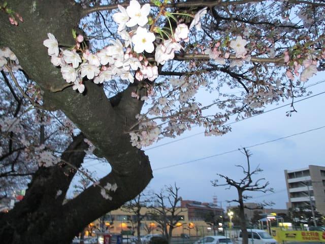 リビングと寝室が別の部屋です。JR八幡駅から徒歩12分です。温水シャワーも新しく取り付け - Kitakyūshū-shi - Huis
