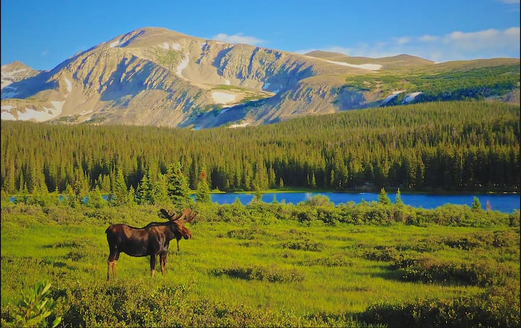 Moose Meadow - Homer - Chatka