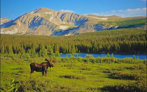 Moose Meadow