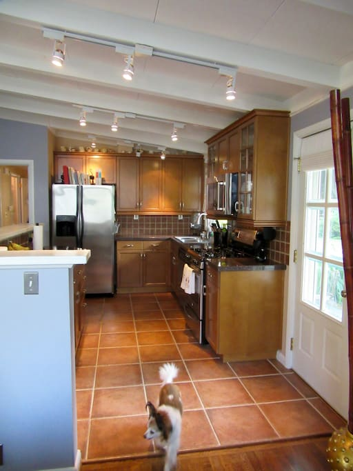 Kitchen -- and Zippy.
