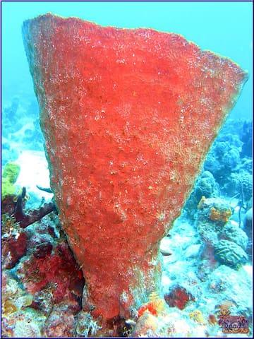 Fondos coralinos