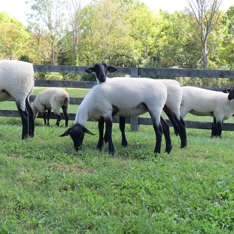 Mt. Salem Farm- Country Elegance