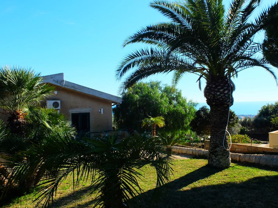 30 year old garden with lots of palms, orange and lemon trees