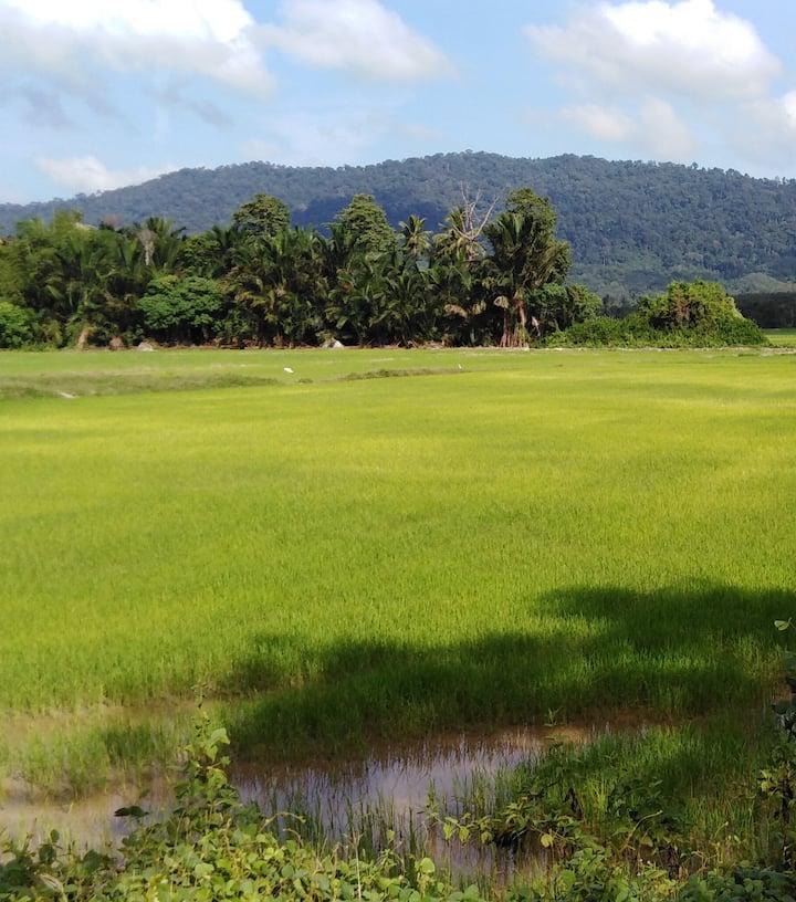 Paddy fields,  always breathtaking