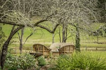 Private area to relax under an ancient pear tree