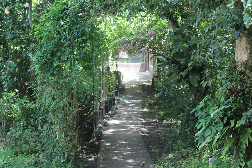 Down the pathway towards the house.