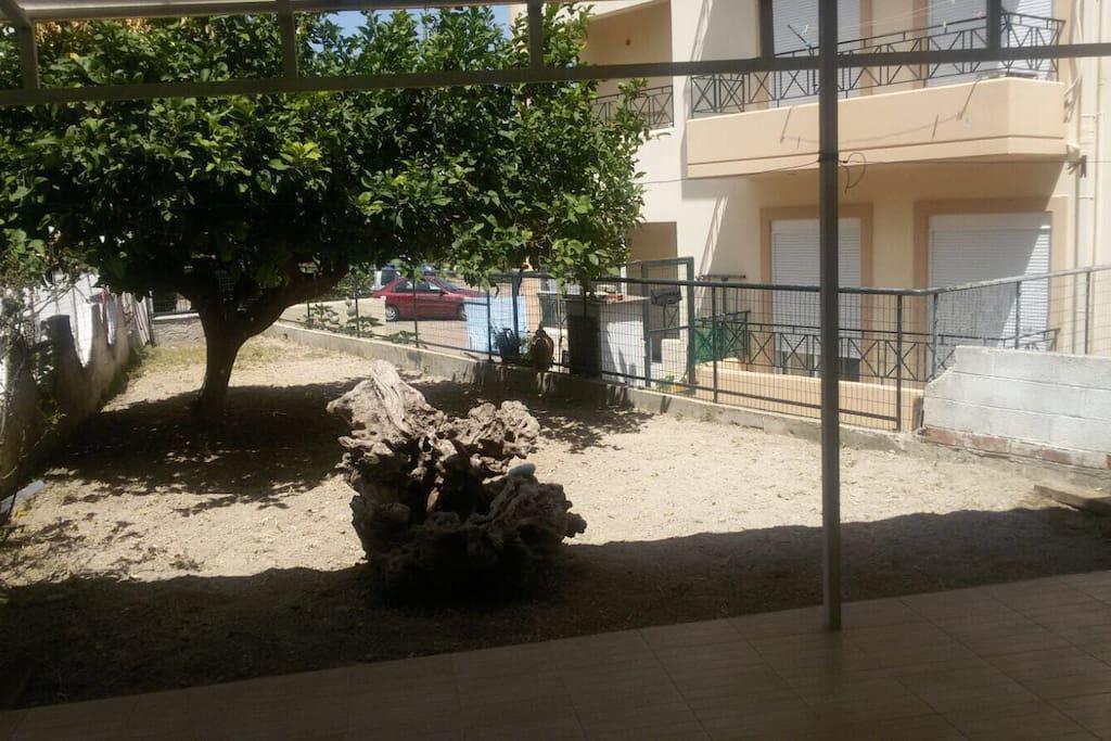 Outside covered patio and lemon tree