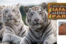 West Midlands Safari & Leisure Park Roller coasters and white tigers. 16m
