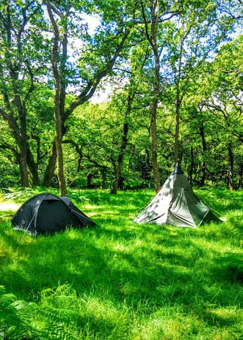 Dartmoor Wilderness Camping! - Newbridge - Apartment