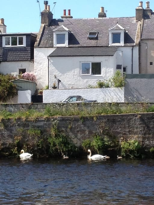 house from the river, with the resident swans ..