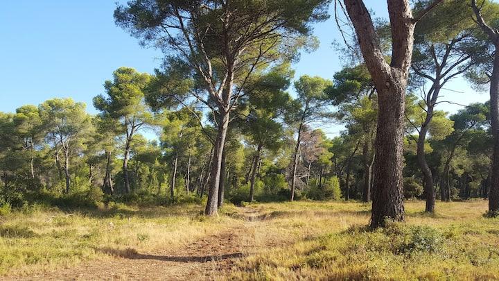 Randonnez en Provence et logez dans un beau studio