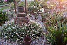 Evening sunshine on my rose garden.