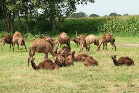 Sleeping at a camel farm! - Berlicum