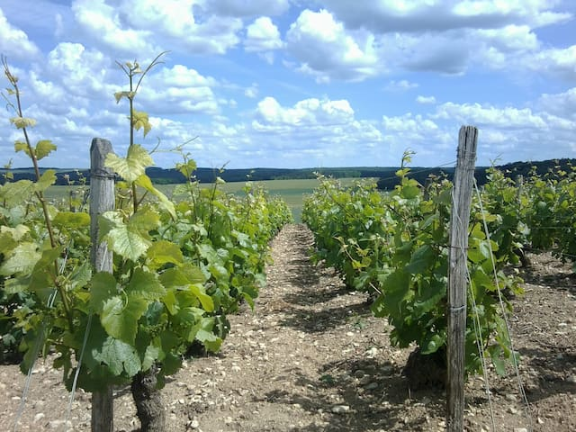 La Vineyard - Bragelogne