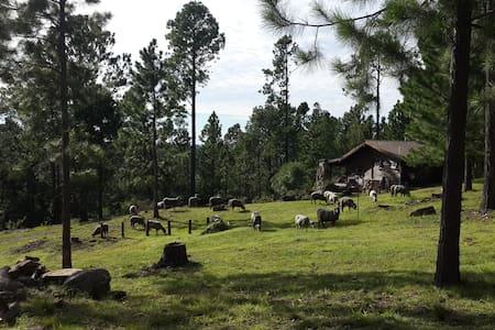 Altos del Durazno / Cabaña La Mamma