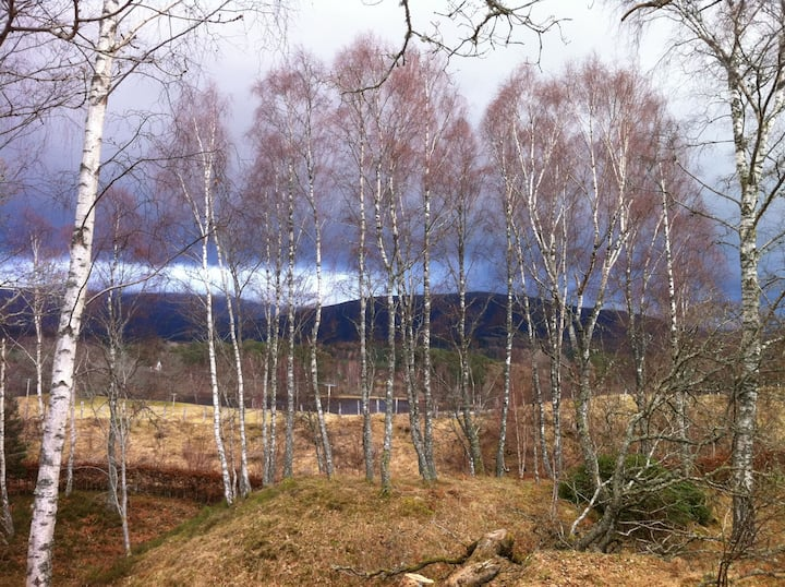 Bright Kincraig Home (our view to Loch Insh)