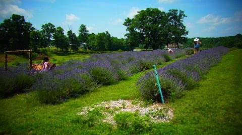The Cottage at Evergreen Lavender Farm
