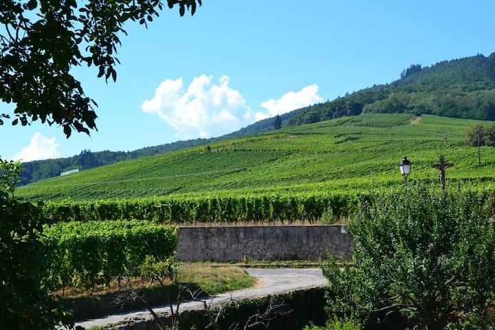Au Coeur des Remparts & du Vignoble Alsacien - Dambach-la-Ville - Apartamento